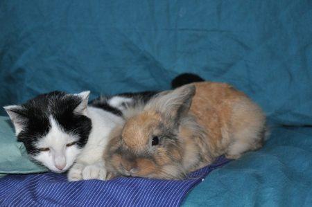 Corso integrativo per coadiutori del gatto e del coniglio (IAA)